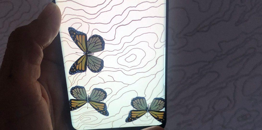 AR application of monarch buttterflies